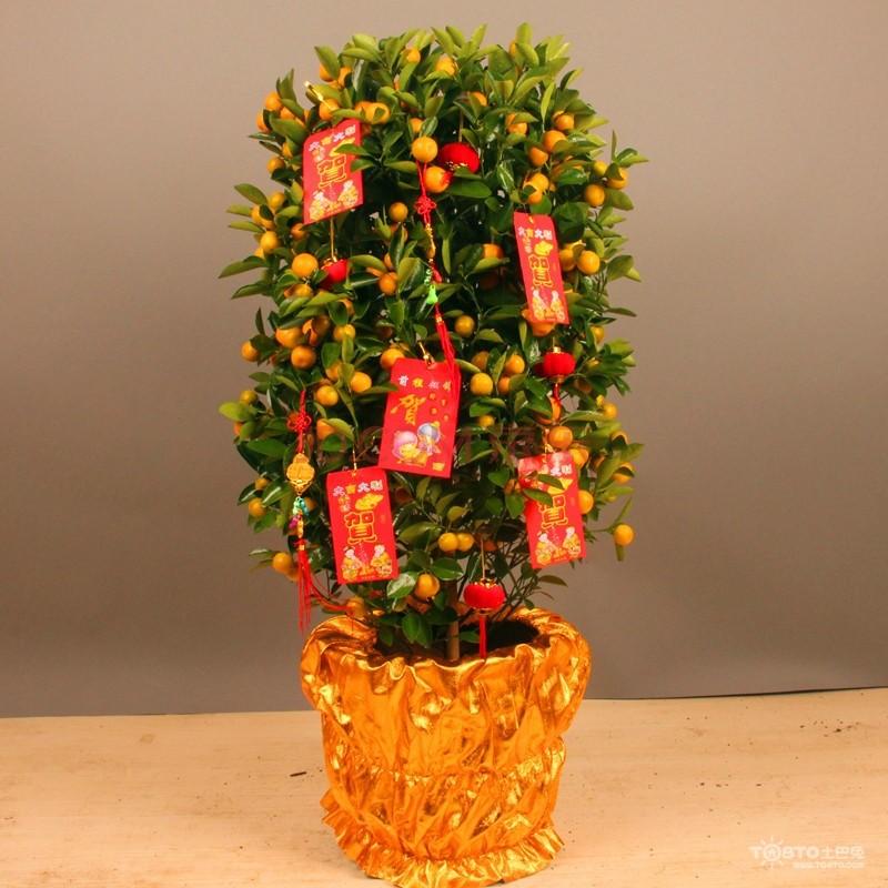 一、新年旺喜气之金桔盆栽  这是过年最必不可少的应节植物之一,好灿灿的小金桔挂满枝头,如同金元宝一样,有着丰收的美好寓意。在家中客厅摆放绿色植物,尤其是寓意美好的金桔盆栽有年味之余,还能催旺一整年的喜气。 二、新年旺人缘之桃花  在春意盎然的新春佳节,不少的家庭都会添置桃花作为装饰点缀,以及提升家人的人缘。本来姿态妩媚,春节期间正是繁花正茂的季节,再加以桃红的喜庆颜色,广受大众的喜爱。家中有桃花的点缀,在浓郁的花香中能让人释放心中的压抑和苦闷,并且还能为人缘or未婚人士的桃花运提升能量。尤其是过于一年运势